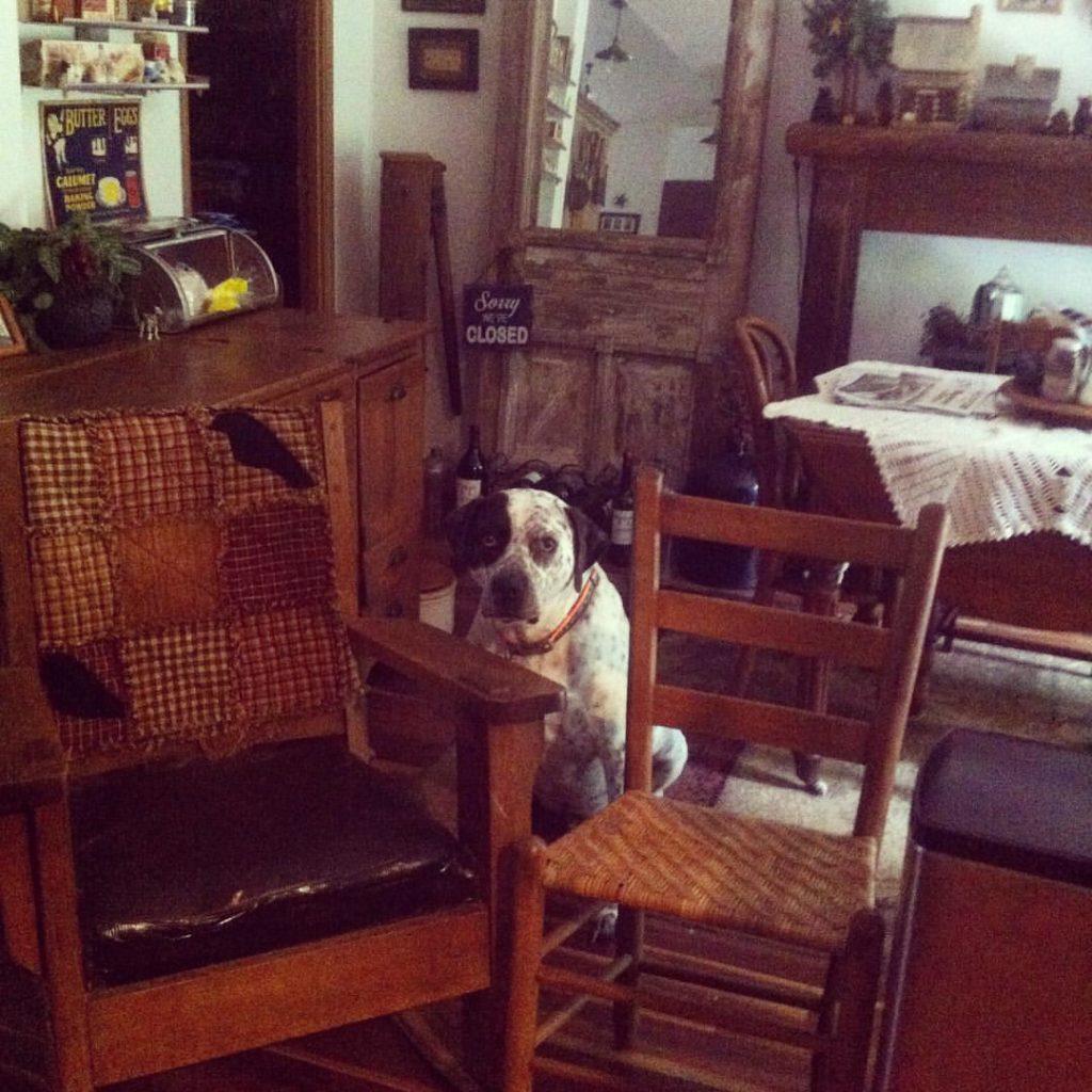 Um cachorro se escondendo atras de duas cadeiras