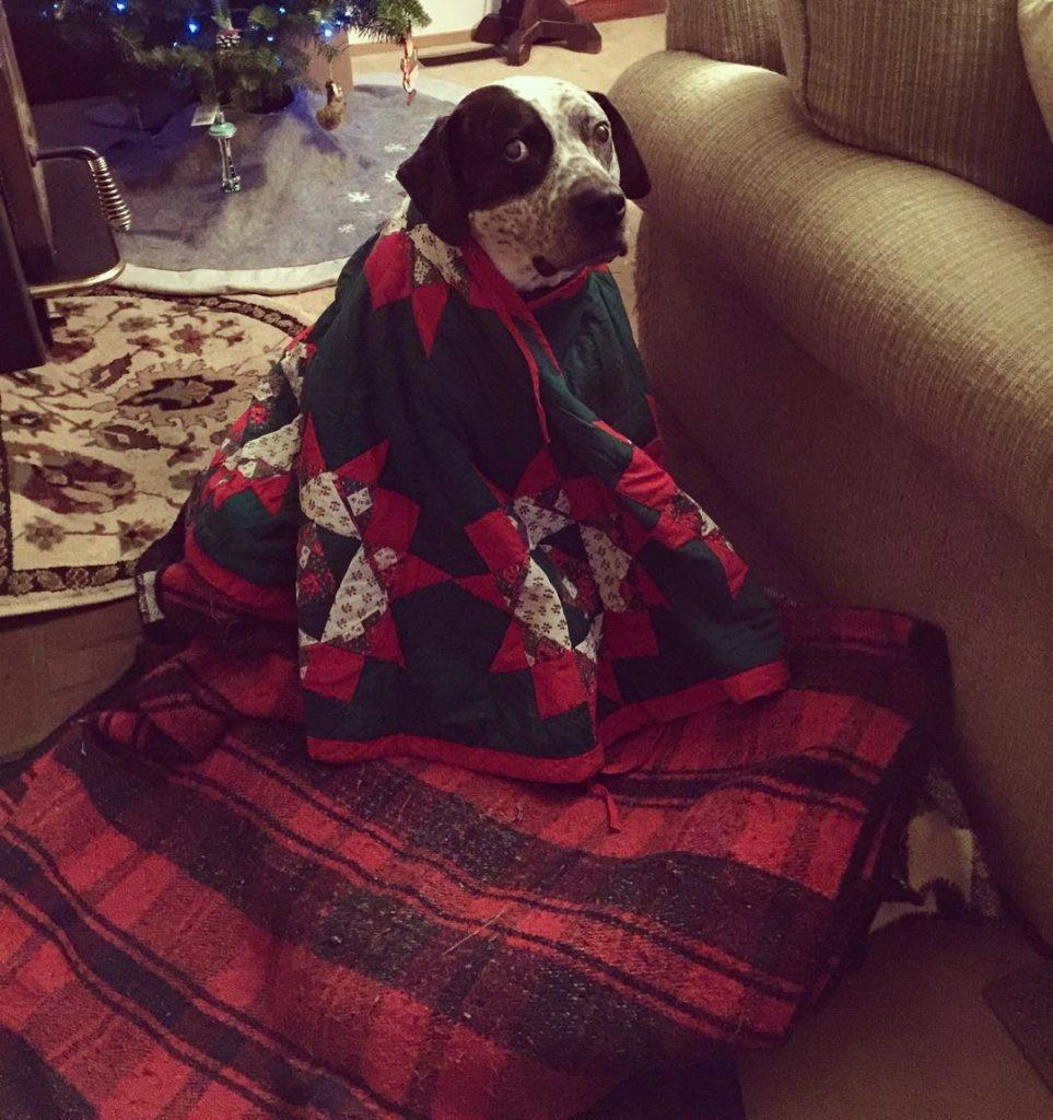 Um cachorro vestido com uma capa com tema natalino