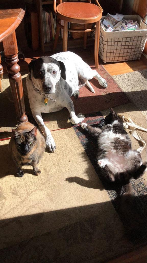 Um cachorro com dois gatos aproveitando juntos a luz e o calor do sol