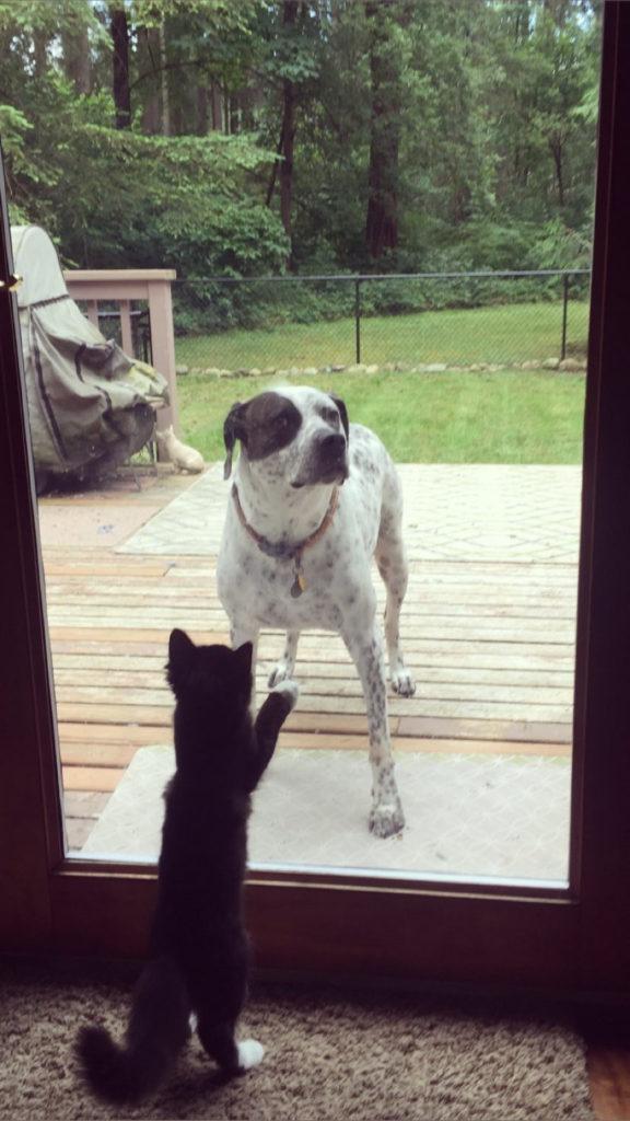 Um gato filhote olhando separado de um cachorro atraves de uma porta de vidro
